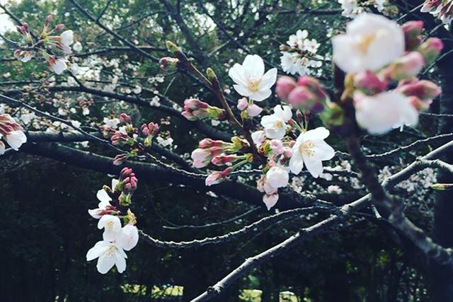 もう少しで、また桜の季節がやってくる