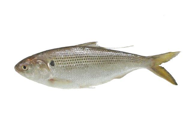 20cmを超える生魚が手軽に釣れる