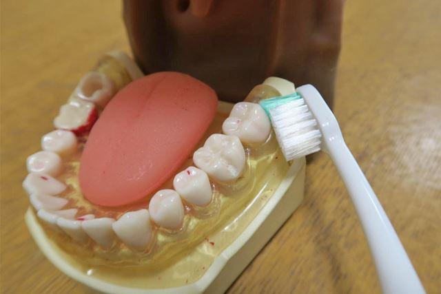奥歯の奥にも届く