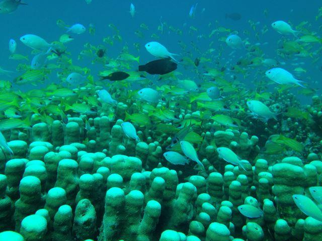 SS-i5に入れたiPhone5で撮影した1枚。幻想的な海中の様子が、簡単に美しく撮影できた