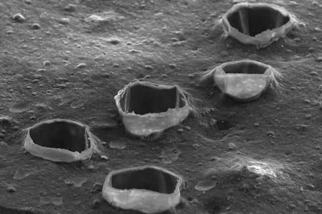 これらの穴は、ゴムに混ぜ込まれた細かなカラである新マイクロ吸水バルーンが形成したもの