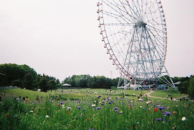 """紫や赤、白のお花たちと観覧車です。曇り空も""""味""""があるっぽい感じ"""
