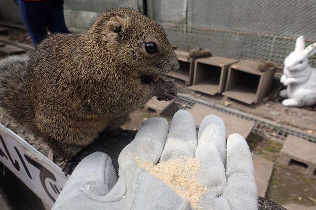 入村時に渡された手袋を着け、餌を乗せてみると警戒もせずリスがやってきた