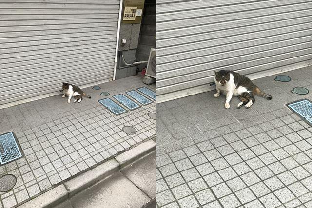 iPhone 7 Plusで撮影した猫。左が「1×」、右が「2X」(光学2倍ズーム)
