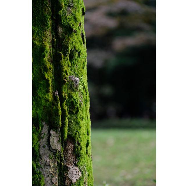 写真11 F2.8、1/320、ISO200、使用レンズ:FUJINON LENS XF50-140mmF2.8 R LM OIS WR