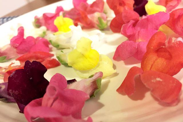英名はスナップドラゴンというお花ですが、日本名では「金魚草」といわれているお花です